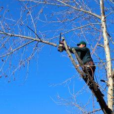 L'élagage des arbres : bien comprendre l'objectif